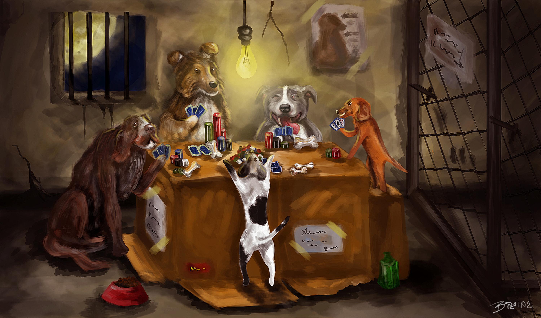 Poker chihuahua